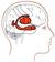 Gefuehl-Gehirn-50