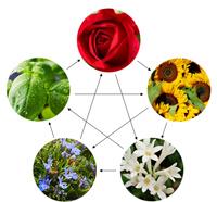 Farbe-Blumen-Elemente-1-klein